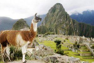 Machu-Picchu-Antik-Kenti-hayvanlari
