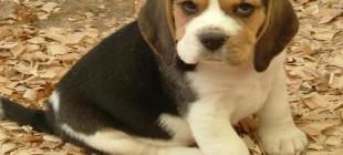 En Güzel Köpek İsimleri