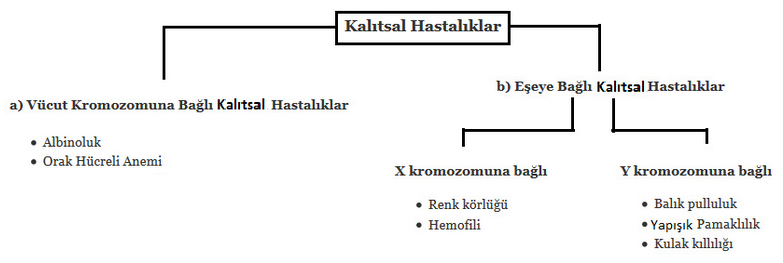 kalitsal-hastaliklar1