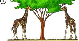 Adaptasyon ve Evrim