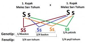 mendel k2