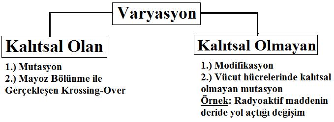 varyasyon