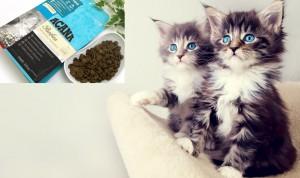 Acana Pacifica kedi mamalari