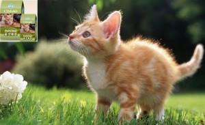 Farmina Cimiao Kedi Mamasi