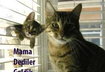 En iyi 5 Kedi Maması