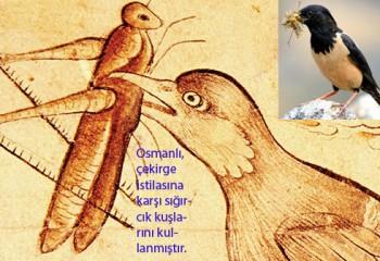 Anadolu ve Osmanlı'da Çekirge ve Böcek İstilaları