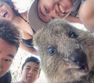 quokka-selfie-trend