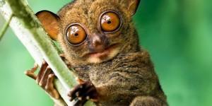 Tersiyer (Primat) Hayvanı Nedir?