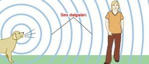 ses-dalgalarinin-yayimasi