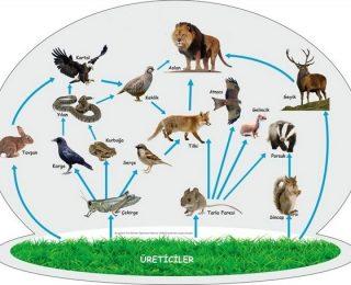 Canlılar ve Enerji İlişkileri