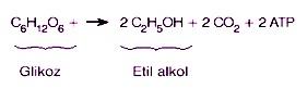 etil-alkol-fermantasyonu