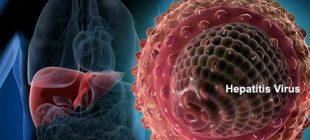HEPATİT-B Taşıyıcılığı Nedir