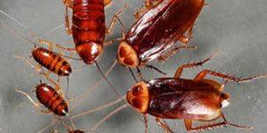 Hamam Böcekleri Hakkında 10 İlginç Bilgi