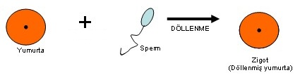 dollenme