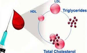 total-kolestrol