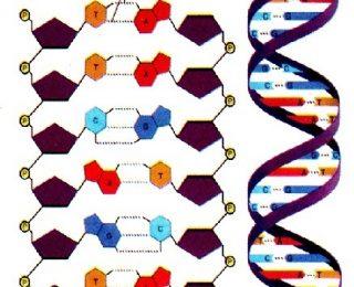 DNA ile İlgili Sorular ve Cevapları