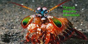İlginç Görünümlü Sıradışı 6 Hayvan