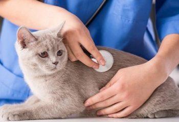 Evcil Kedilerde Hastalık Belirtisi