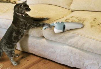 Evdeki Kedi Tüyleri Nasıl Temizlenir