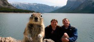 Sincaplar Hakkında Muhtemelen Bilmediğiniz 20 Bilgi