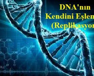 DNA'nın Kendini Eşlemesi (Yarı Korunumlu Eşleme-Replikasyon)