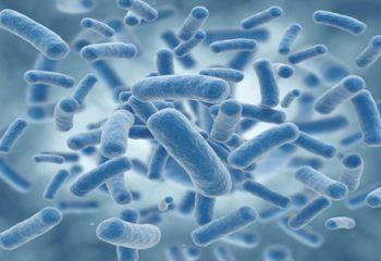 Probiyotik Nedir ve Faydaları Nelerdir