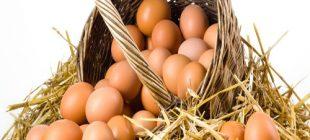 Yumurta Satın Alırken Nelere Dikkat Etmeliyiz