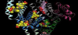 Total Protein Nedir, Total Protein Neden Yükselir ve Düşer