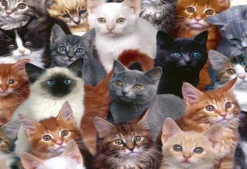 Dünyanın En Pahalı Kedi Irkları