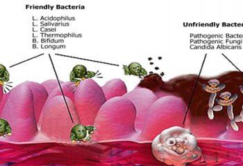 Mide ve Bağırsaklarımızda Yaklaşık 100 Trilyon Probiotik Bakteri Yaşıyor