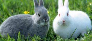 Evde Tavşan Bakımı İçin Temel Bilgiler