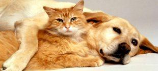 Kedi mi Yoksa Köpek mi Daha Zeki