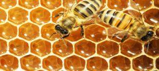 Arılar Peteklerini Neden Altıgen Yaparlar