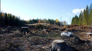 orman katliamı belek
