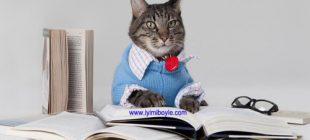 Kedilerden Alacağımız Hayat Dersleri