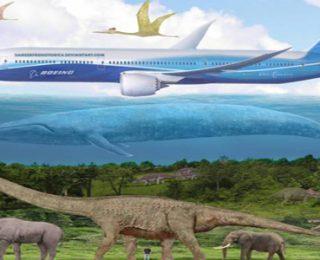 Dünyanın En Büyük Hayvanı