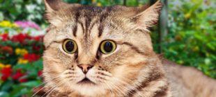 Kedilerin En Sevmediği Davranışlar