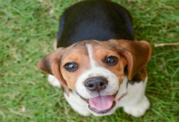 Köpeklerin Dili Çözüldü