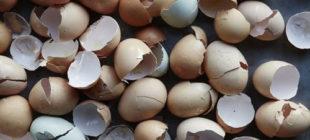 Yumurta Kabuklarını Atmayın İşte Ev İşlerindeki İnanılmaz Faydaları