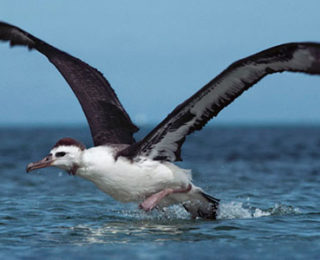 Galapagos Adalarındaki İlginç Görünümlü Hayvan Türleri