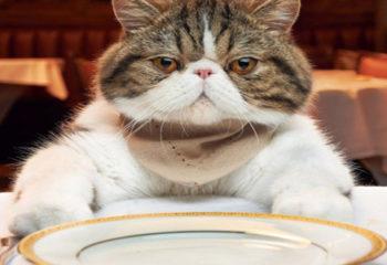 Kediler Ne Yiyemez, Kediler için Tehlikeli Yiyecekler