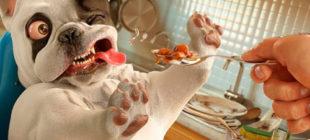 Köpeklere Asla Vermemeniz Gereken Gıdalar