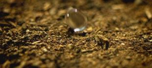 Yağmur Yağdıktan Sonra Toprak Neden Kokar