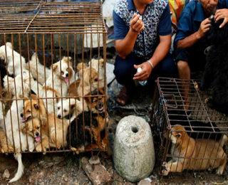 Çinlilerin Yedikleri Hayvanlar Gerçekten İnsanlık Dışı